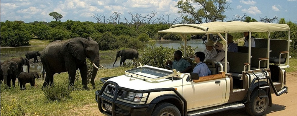 Game Drive in Chobe National Park, Botswana